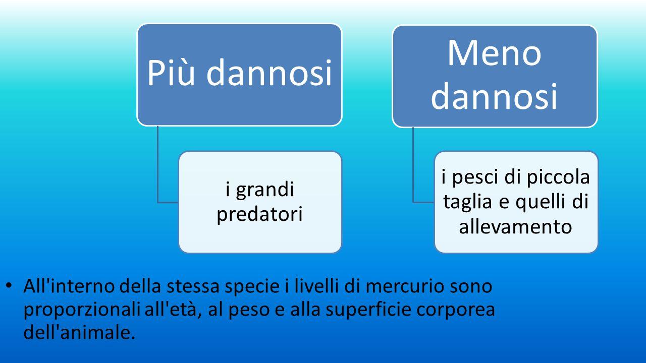Il burro Nei grassi animali si concentra la diossina.