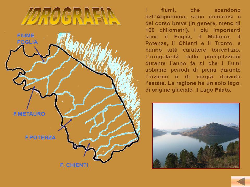 I fiumi, che scendono dall'Appennino, sono numerosi e dal corso breve (in genere, meno di 100 chilometri). I più importanti sono il Foglia, il Metauro