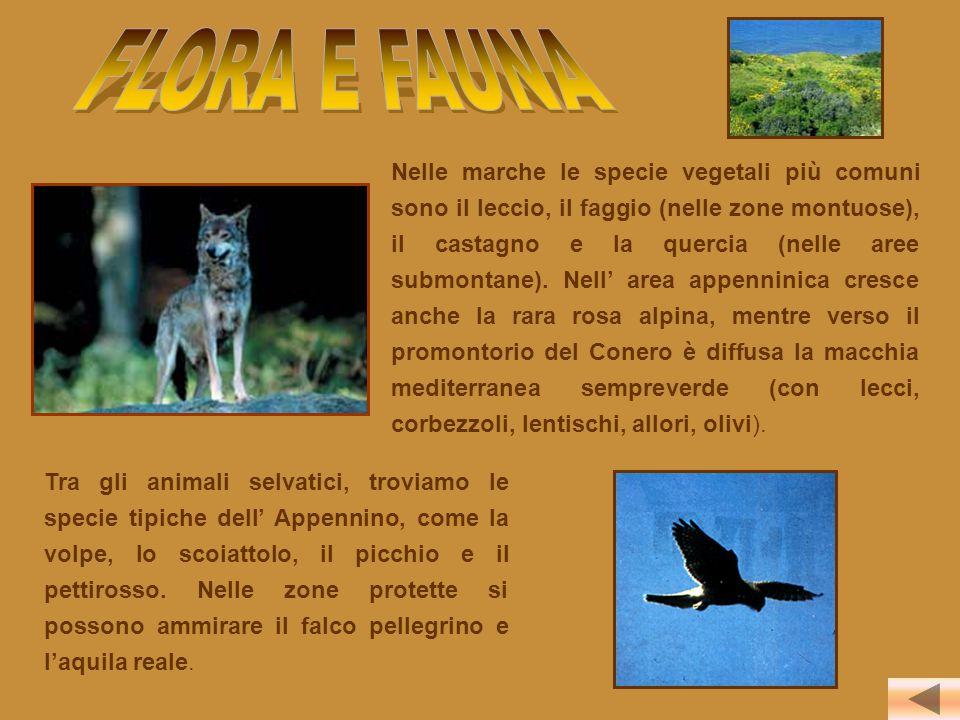 Nelle marche le specie vegetali più comuni sono il leccio, il faggio (nelle zone montuose), il castagno e la quercia (nelle aree submontane). Nell' ar