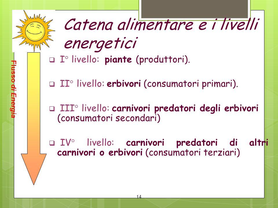 Catena alimentare e i livelli energetici  I° livello: piante (produttori).  II° livello: erbivori (consumatori primari).  III° livello: carnivori p