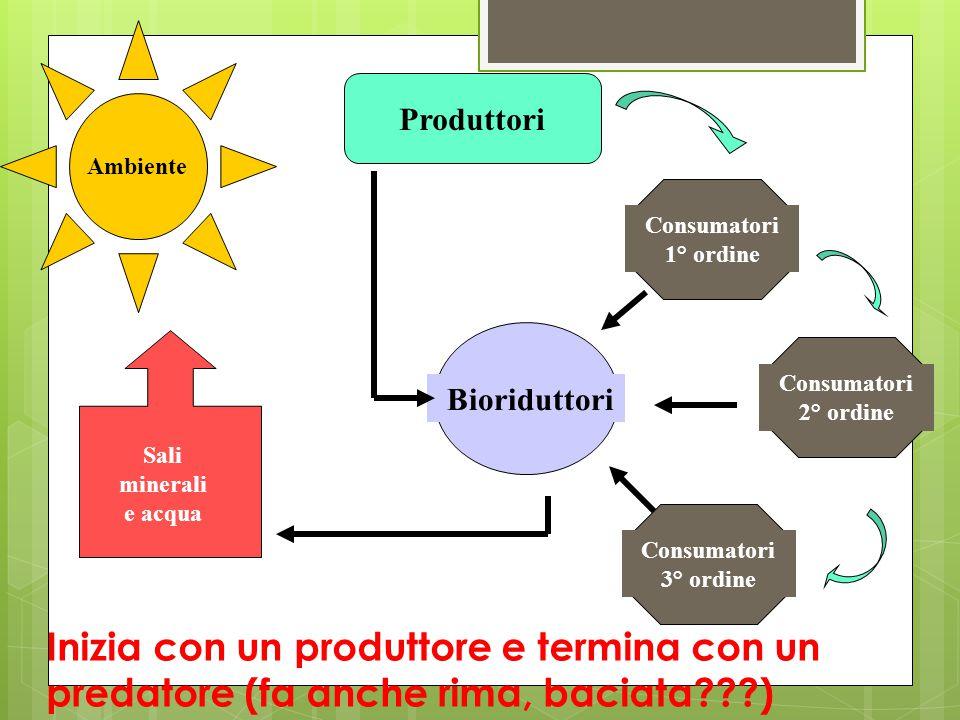 Ambiente Produttori Consumatori 1° ordine Consumatori 2° ordine Consumatori 3° ordine Bioriduttori Sali minerali e acqua Inizia con un produttore e te