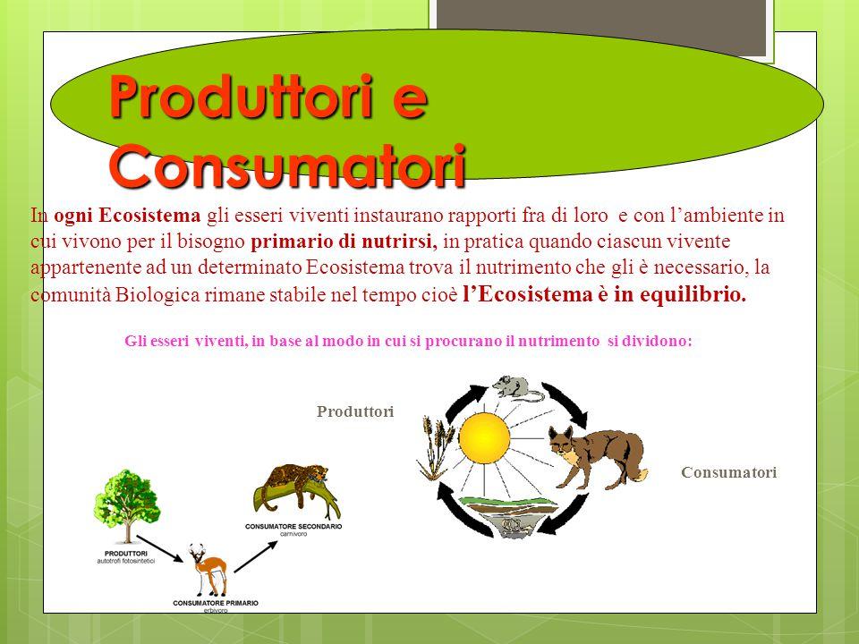Produttori e Consumatori In ogni Ecosistema gli esseri viventi instaurano rapporti fra di loro e con l'ambiente in cui vivono per il bisogno primario