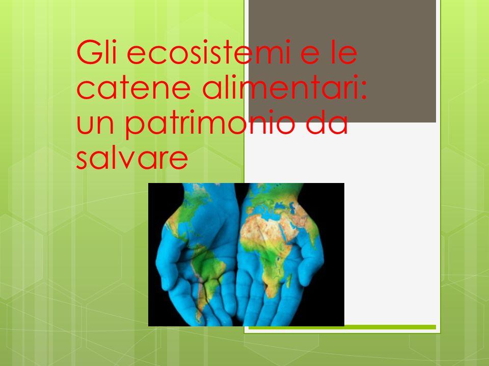 Gli ecosistemi e le catene alimentari: un patrimonio da salvare 2
