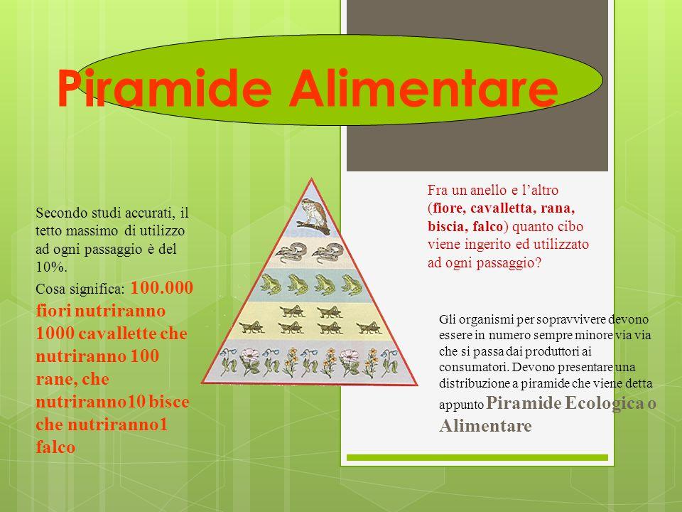 Piramide Alimentare Fra un anello e l'altro (fiore, cavalletta, rana, biscia, falco) quanto cibo viene ingerito ed utilizzato ad ogni passaggio? Secon