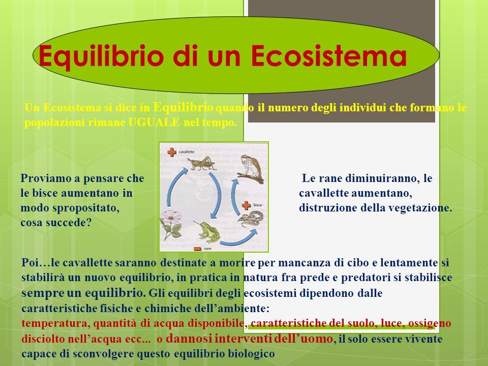 Equilibrio di un Ecosistema Un Ecosistema si dice in Equilibrio quando il numero degli individui che formano le popolazioni rimane UGUALE nel tempo. P