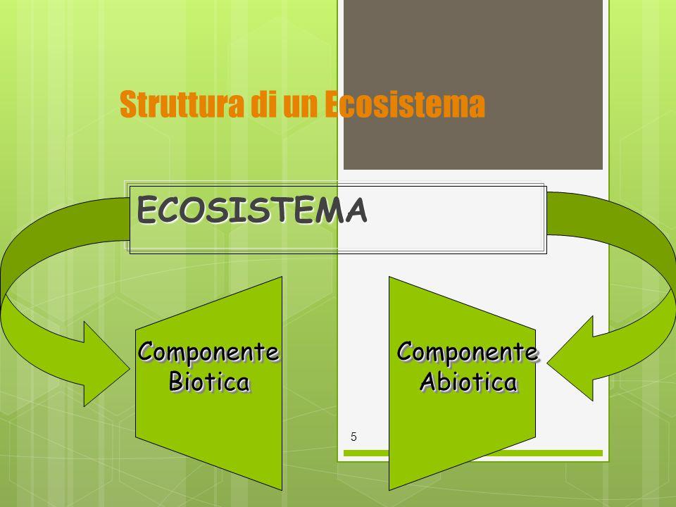 Struttura di un EcosistemaECOSISTEMA 5 Componente Biotica Componente Abiotica