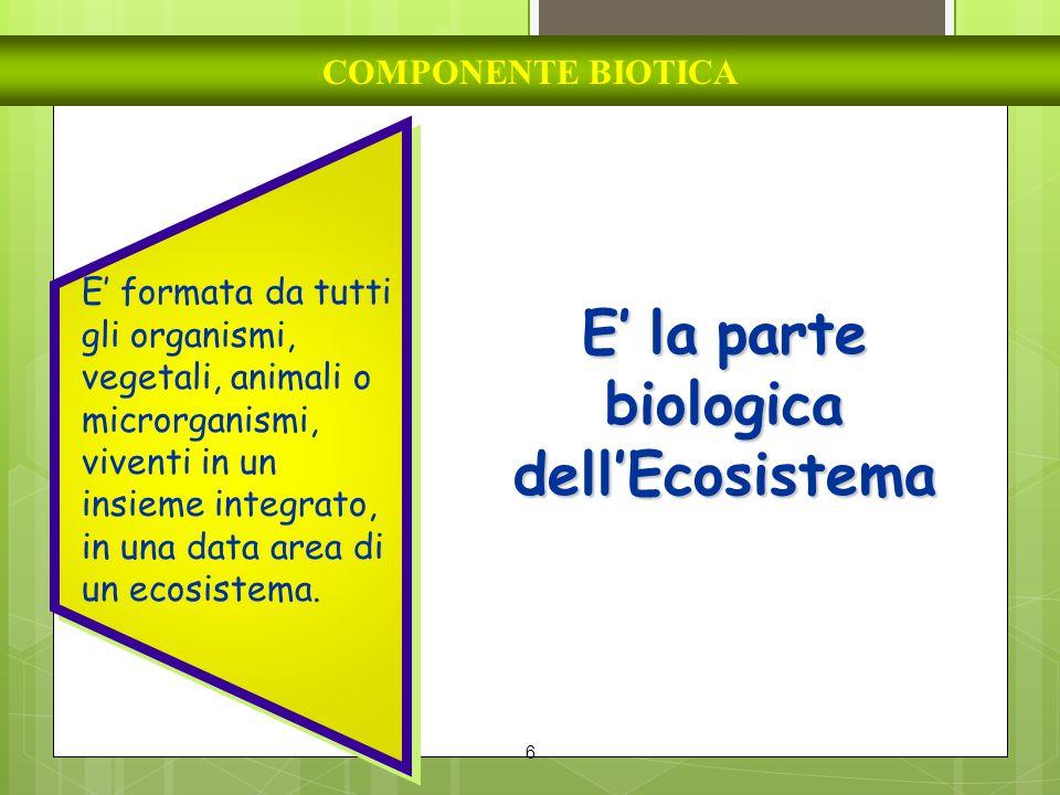 6 COMPONENTE BIOTICA E' la parte biologica dell'Ecosistema E' formata da tutti gli organismi, vegetali, animali o microrganismi, viventi in un insieme