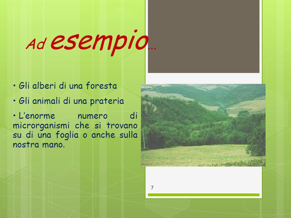 Ad esempio … Gli alberi di una foresta Gli animali di una prateria L'enorme numero di microrganismi che si trovano su di una foglia o anche sulla nost