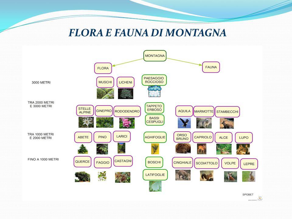 FLORA E FAUNA DI MONTAGNA