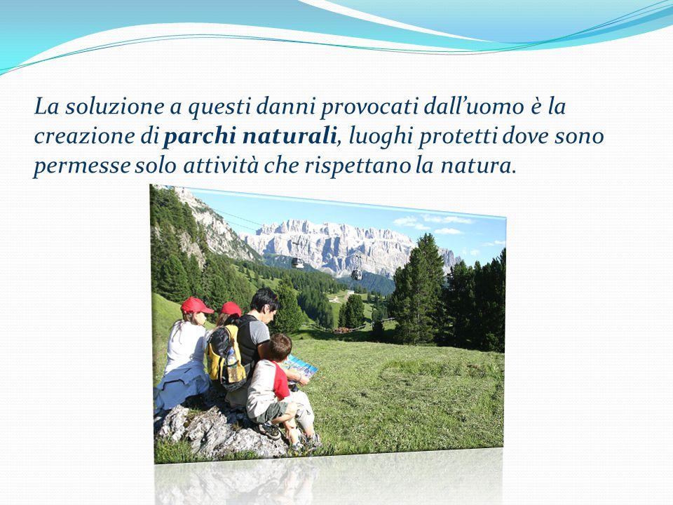 La soluzione a questi danni provocati dall'uomo è la creazione di parchi naturali, luoghi protetti dove sono permesse solo attività che rispettano la natura.