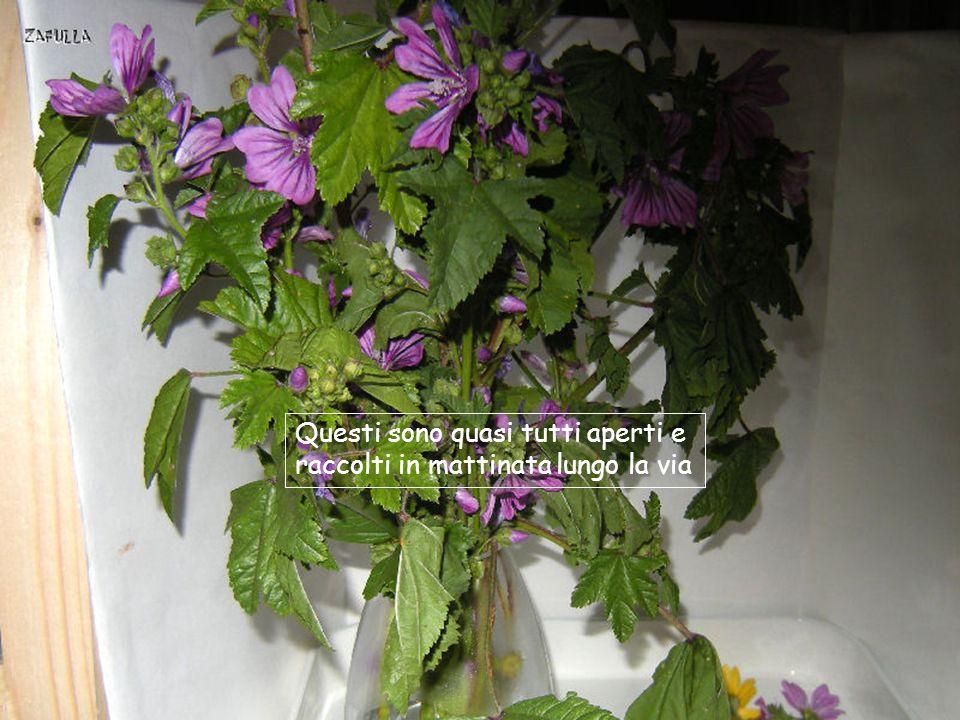 Selezioniamo rametti sottili e fioriti