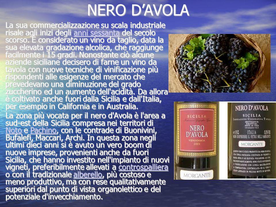 NERO D'AVOLA La sua commercializzazione su scala industriale risale agli inizi degli anni sessanta del secolo scorso.