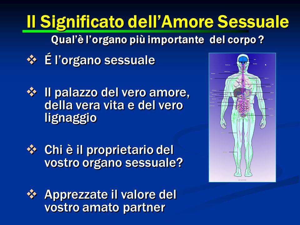 Il Significato dell'Amore Sessuale Qual'è l'organo più importante del corpo ? Il Significato dell'Amore Sessuale Qual'è l'organo più importante del co