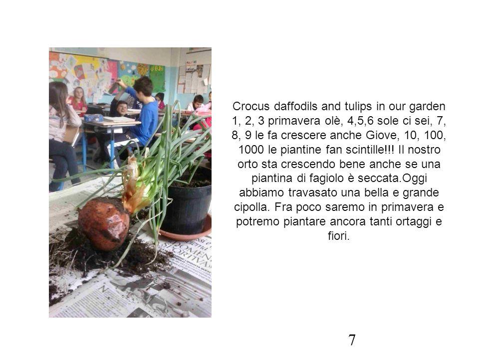 Crocus daffodils and tulips in our garden 1, 2, 3 primavera olè, 4,5,6 sole ci sei, 7, 8, 9 le fa crescere anche Giove, 10, 100, 1000 le piantine fan