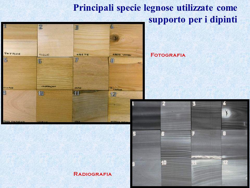 Principali specie legnose utilizzate come supporto per i dipinti Radiografia Fotografia