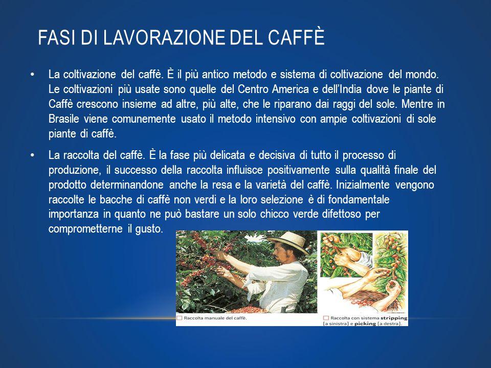 FASI DI LAVORAZIONE DEL CAFFÈ La coltivazione del caffè. È il più antico metodo e sistema di coltivazione del mondo. Le coltivazioni più usate sono qu