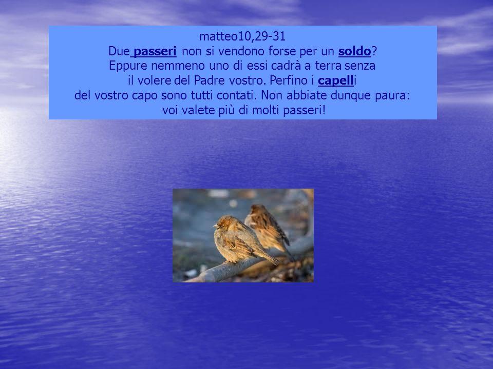 matteo10,29-31 Due passeri non si vendono forse per un soldo? Eppure nemmeno uno di essi cadrà a terra senza il volere del Padre vostro. Perfino i cap