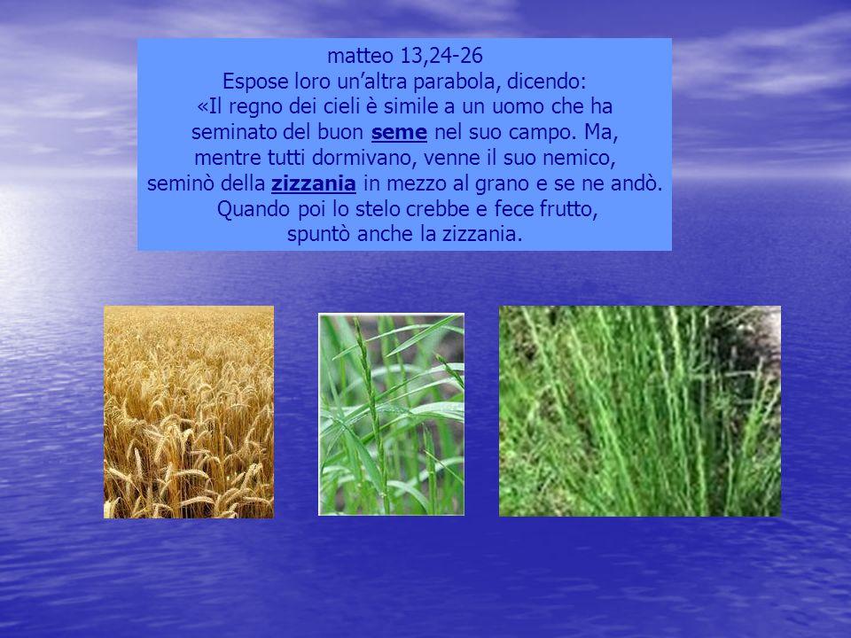 matteo 13,24-26 Espose loro un'altra parabola, dicendo: «Il regno dei cieli è simile a un uomo che ha seminato del buon seme nel suo campo. Ma, mentre