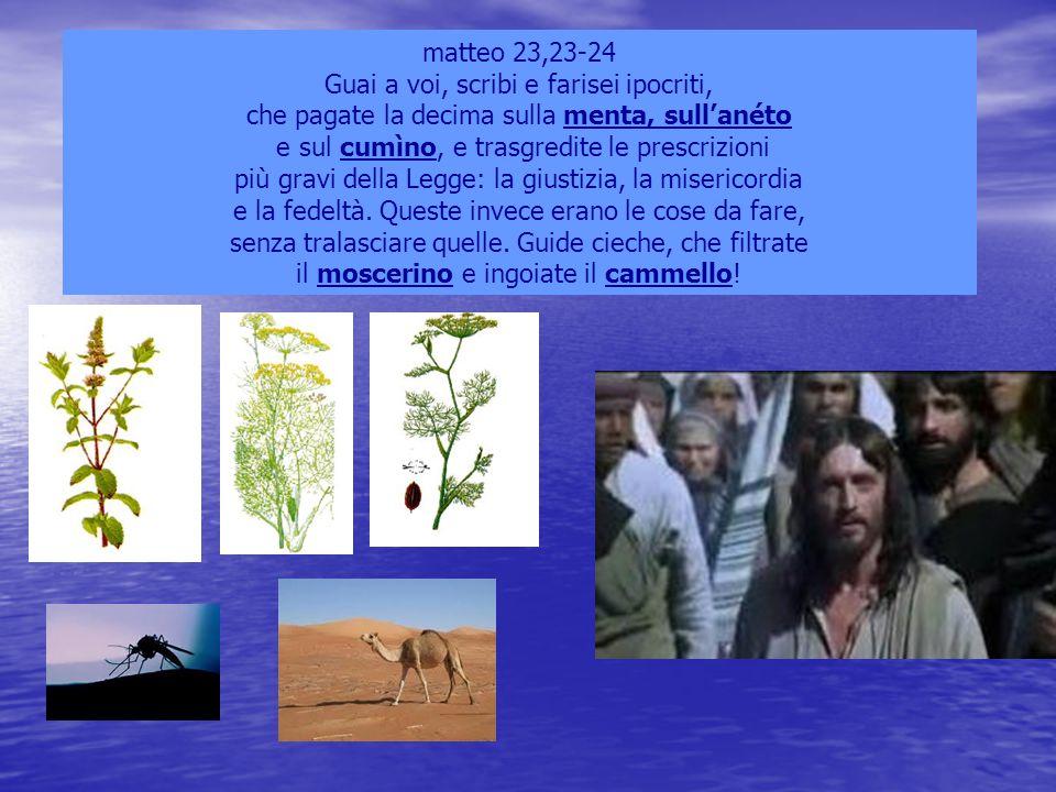 matteo 23,23-24 Guai a voi, scribi e farisei ipocriti, che pagate la decima sulla menta, sull'anéto e sul cumìno, e trasgredite le prescrizioni più gr
