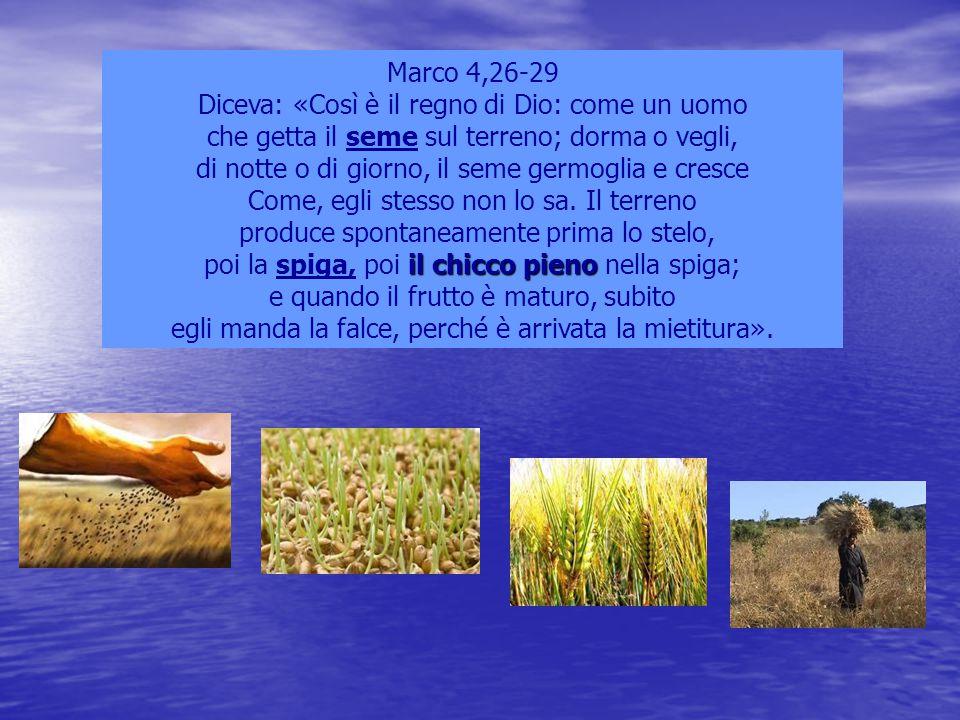 Marco 4,26-29 Diceva: «Così è il regno di Dio: come un uomo che getta il seme sul terreno; dorma o vegli, di notte o di giorno, il seme germoglia e cr