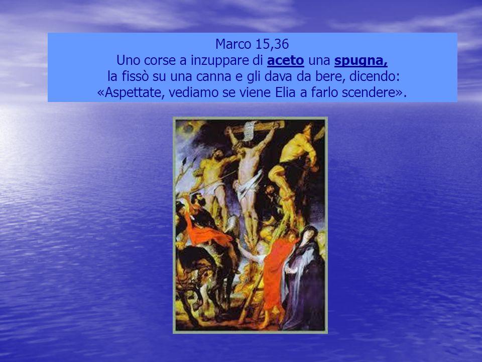 Marco 15,36 Uno corse a inzuppare di aceto una spugna, la fissò su una canna e gli dava da bere, dicendo: «Aspettate, vediamo se viene Elia a farlo sc