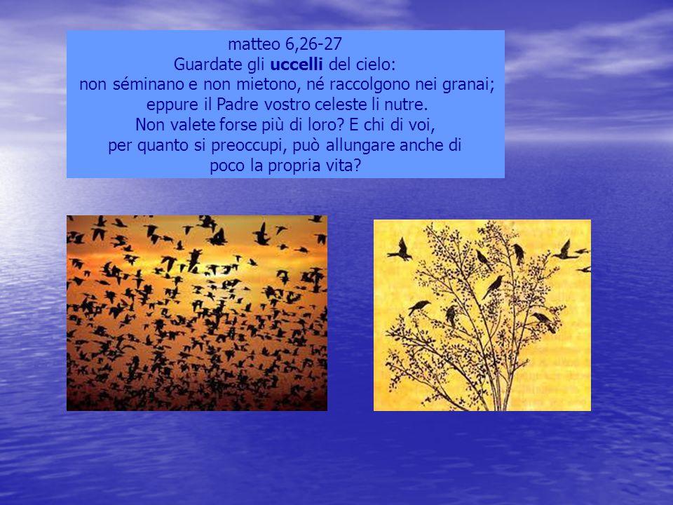 matteo 6,26-27 Guardate gli uccelli del cielo: non séminano e non mietono, né raccolgono nei granai; eppure il Padre vostro celeste li nutre. Non vale