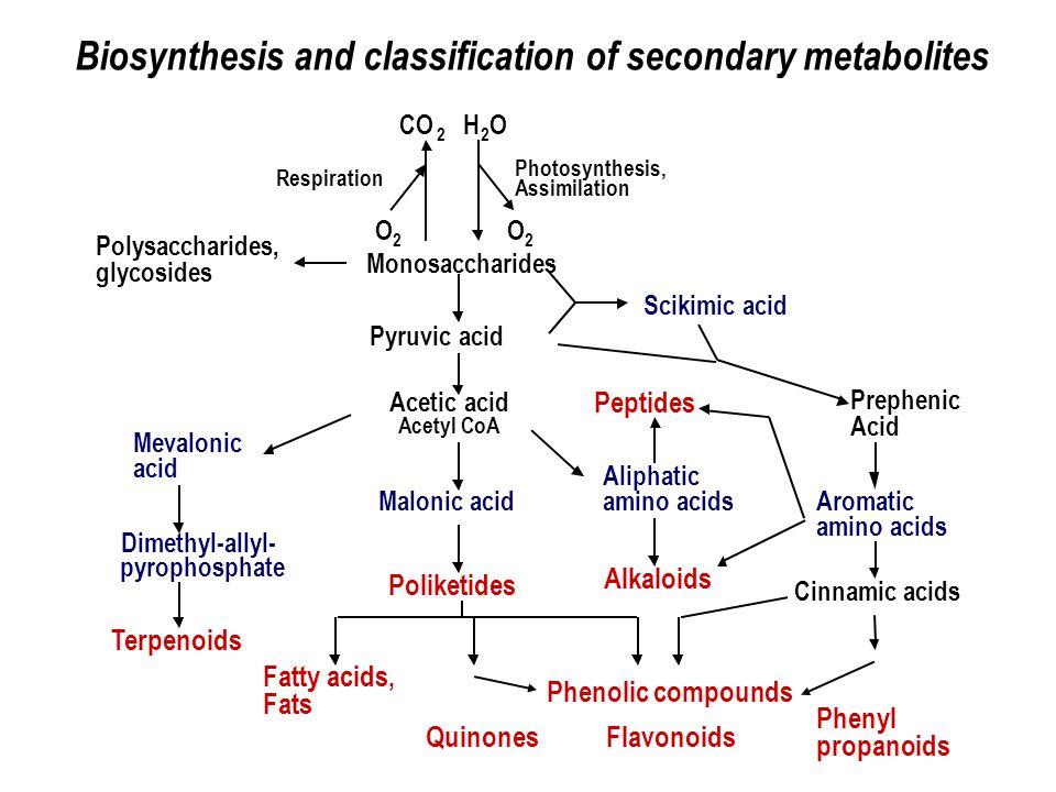 Le molecole e i fitocomplessi Fenilpropanoidi C6C3 – es.