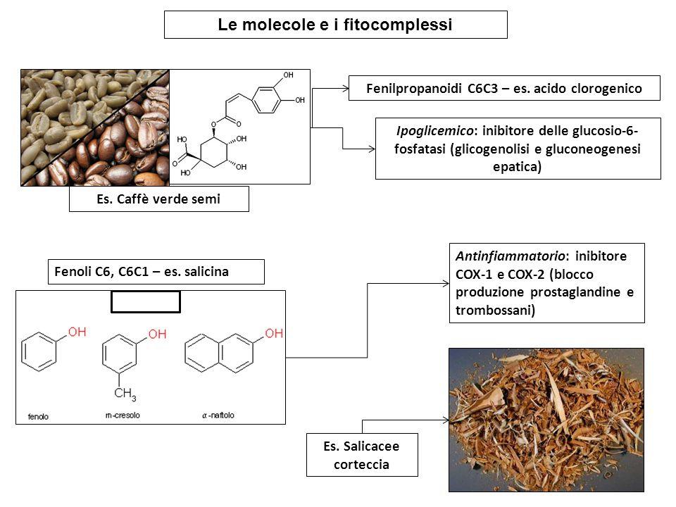 Le molecole e i fitocomplessi Fenilpropanoidi C6C3 – es. acido clorogenico Es. Caffè verde semi Ipoglicemico: inibitore delle glucosio-6- fosfatasi (g
