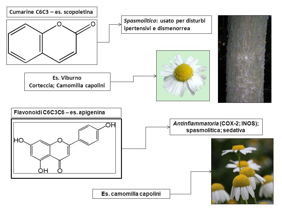 Cumarine C6C3 – es. scopoletina Es. Viburno Corteccia; Camomilla capolini Spasmolitico: usato per disturbi ipertensivi e dismenorrea Flavonoidi C6C3C6