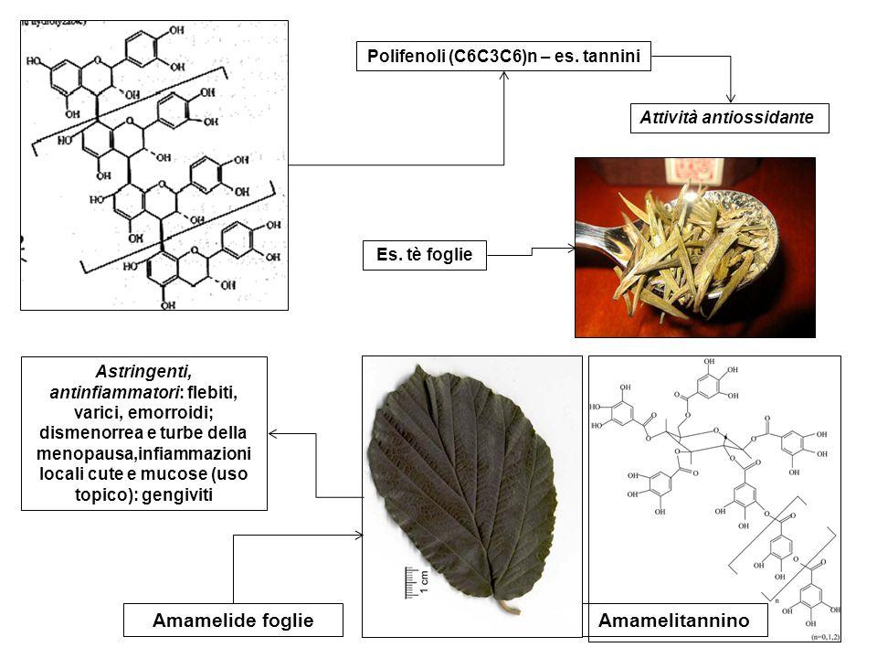 Monoterpeni (C10) – es.canfora Es.