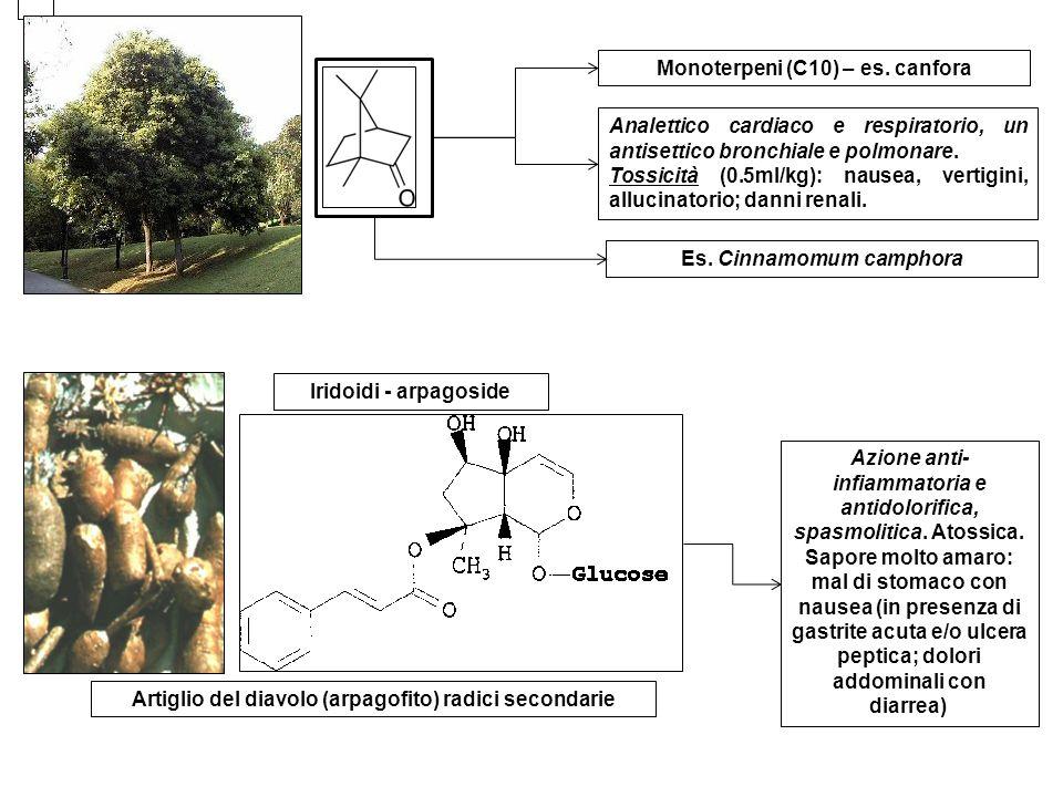 Diterpeni (C20) - stevioside Dolcificante; 300 vv meno calorico del saccarosio; non induce risposta glicemica; probabile azione ipotensiva Stevia rebaudiana Sesquiterpeni (C15) – es.
