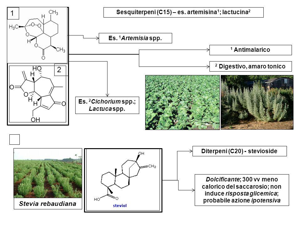 Diterpeni (C20) - stevioside Dolcificante; 300 vv meno calorico del saccarosio; non induce risposta glicemica; probabile azione ipotensiva Stevia reba
