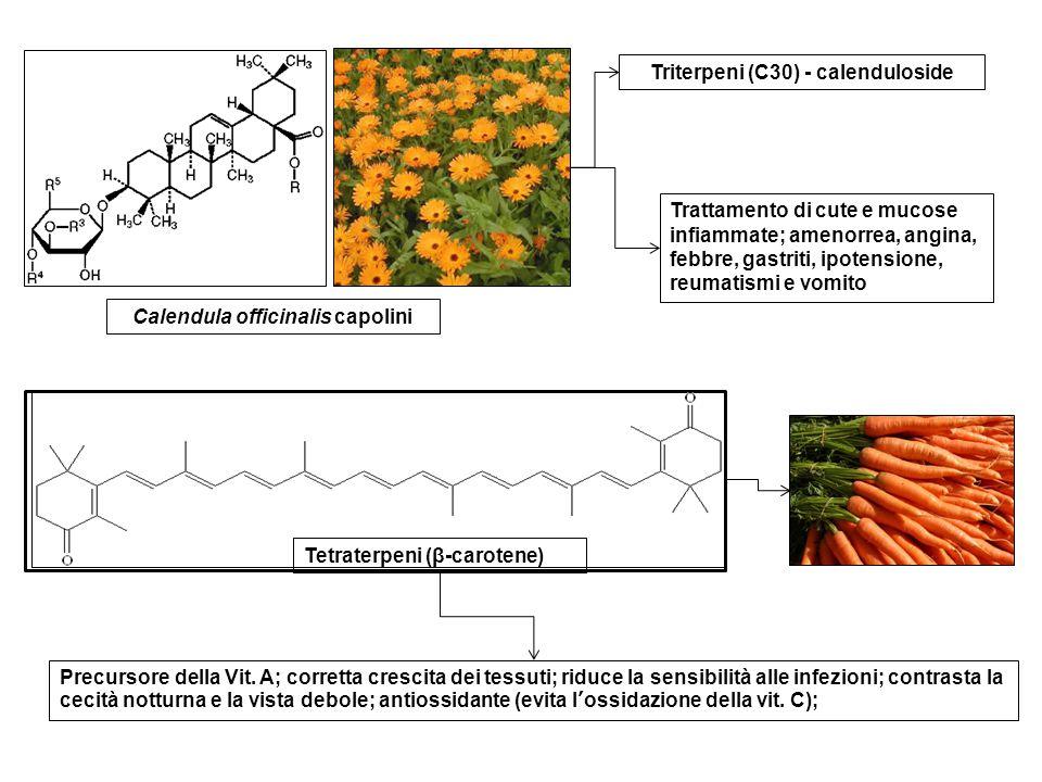Calendula officinalis capolini Triterpeni (C30) - calenduloside Trattamento di cute e mucose infiammate; amenorrea, angina, febbre, gastriti, ipotensi