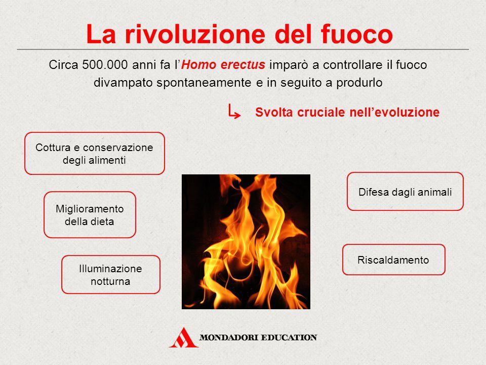 La rivoluzione del fuoco Cottura e conservazione degli alimenti Riscaldamento Difesa dagli animali Illuminazione notturna Circa 500.000 anni fa l'Homo