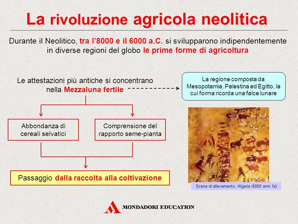 La rivoluzione agricola neolitica Durante il Neolitico, tra l'8000 e il 6000 a.C. si svilupparono indipendentemente in diverse regioni del globo le pr