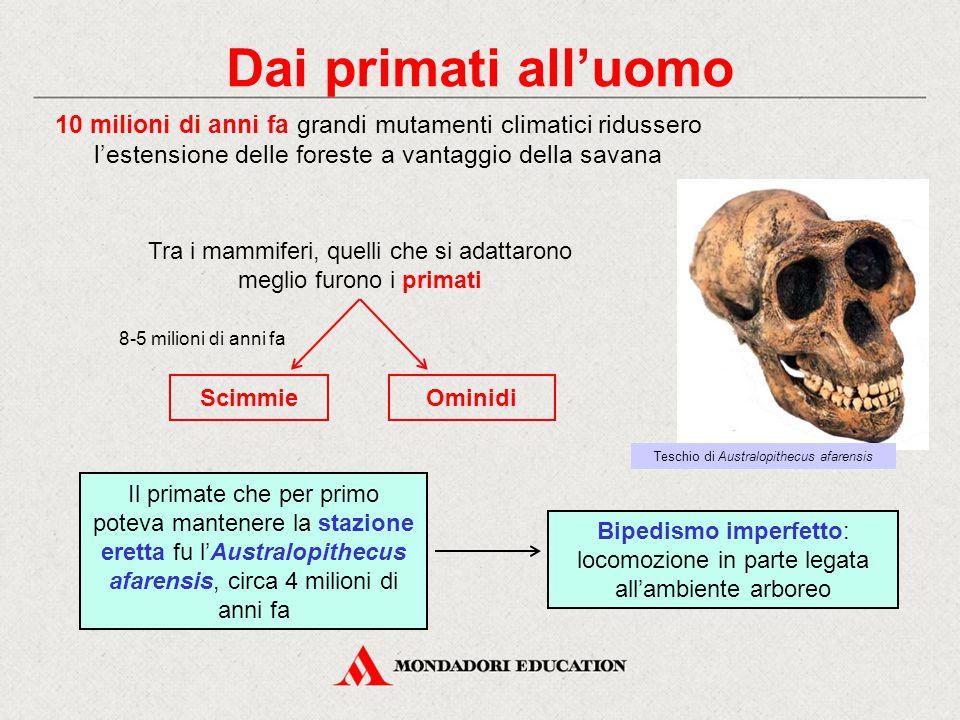 Dai primati all'uomo Tra i mammiferi, quelli che si adattarono meglio furono i primati Scimmie 10 milioni di anni fa grandi mutamenti climatici riduss