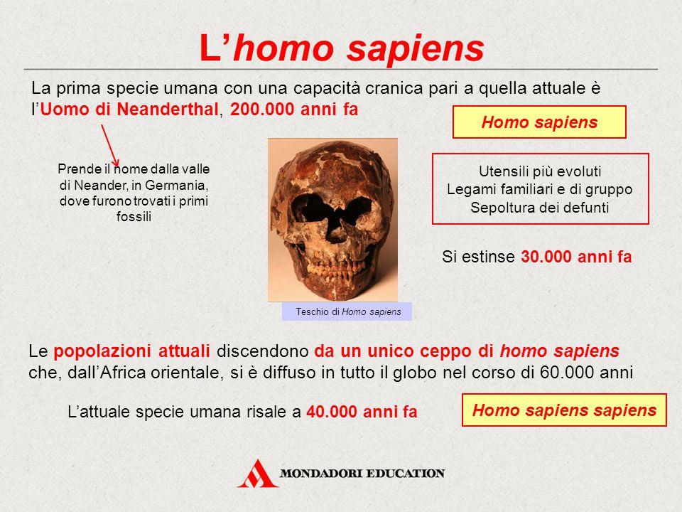 L'homo sapiens La prima specie umana con una capacità cranica pari a quella attuale è l'Uomo di Neanderthal, 200.000 anni fa Homo sapiens Utensili più