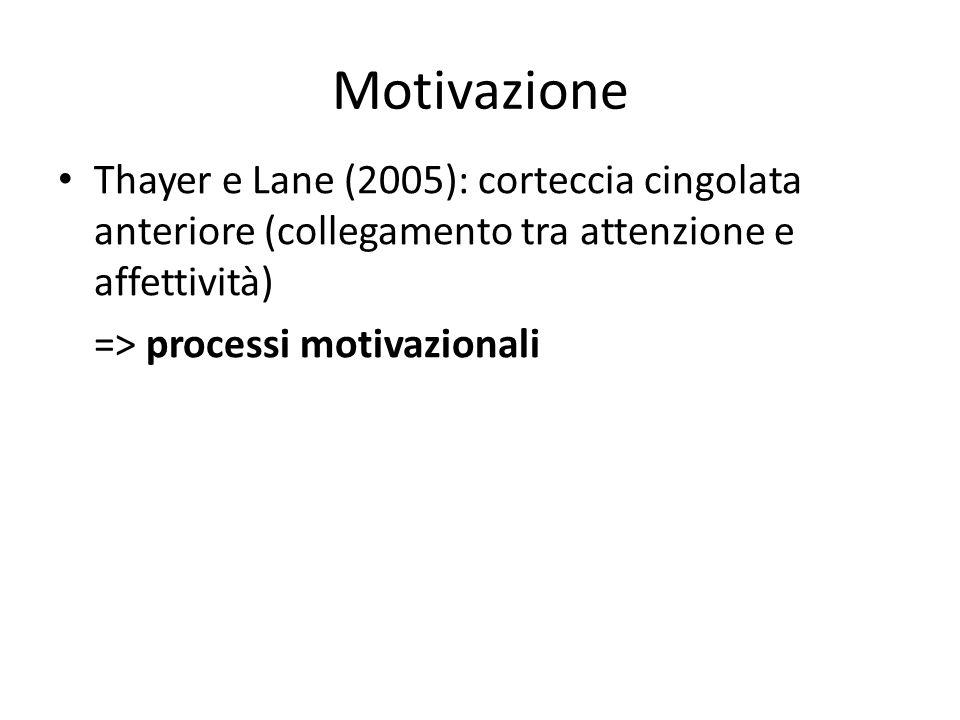 Motivazione Thayer e Lane (2005): corteccia cingolata anteriore (collegamento tra attenzione e affettività) => processi motivazionali