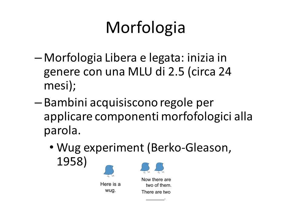 – Morfologia Libera e legata: inizia in genere con una MLU di 2.5 (circa 24 mesi); – Bambini acquisiscono regole per applicare componenti morfofologic