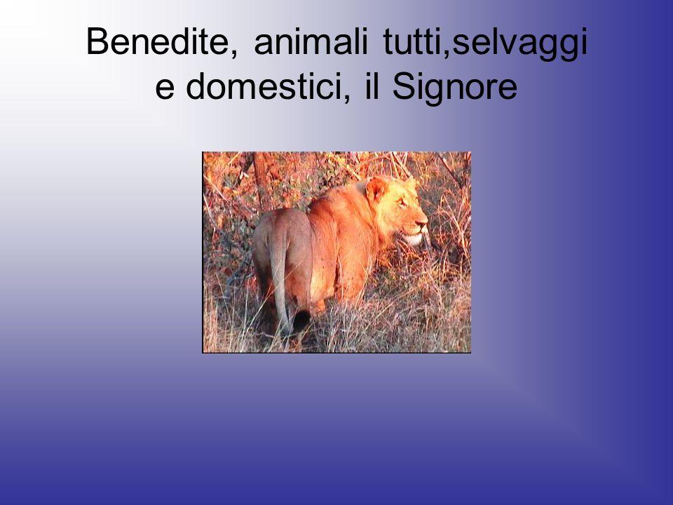 Benedite, animali tutti,selvaggi e domestici, il Signore