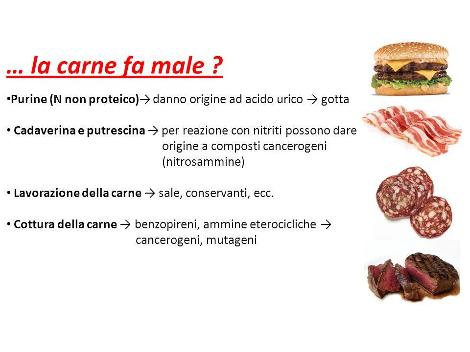 … la carne fa male ? Purine (N non proteico)→ danno origine ad acido urico → gotta Cadaverina e putrescina → per reazione con nitriti possono dare ori