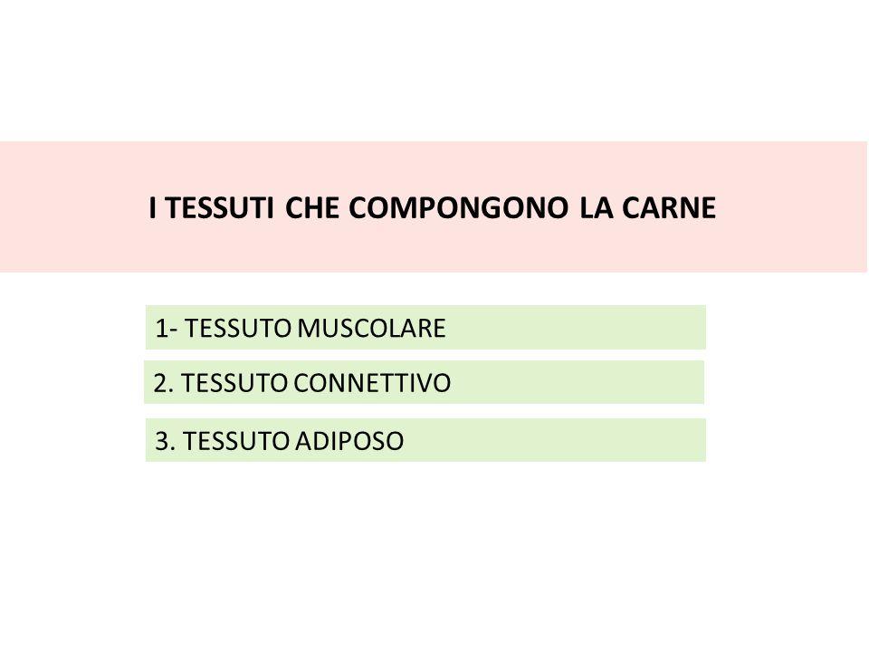 I TESSUTI CHE COMPONGONO LA CARNE 1- TESSUTO MUSCOLARE 2. TESSUTO CONNETTIVO 3. TESSUTO ADIPOSO