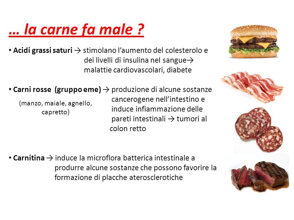… la carne fa male ? Acidi grassi saturi → stimolano l'aumento del colesterolo e dei livelli di insulina nel sangue→ malattie cardiovascolari, diabete
