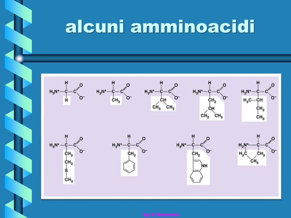 alcuni amminoacidi by S. Nocerino