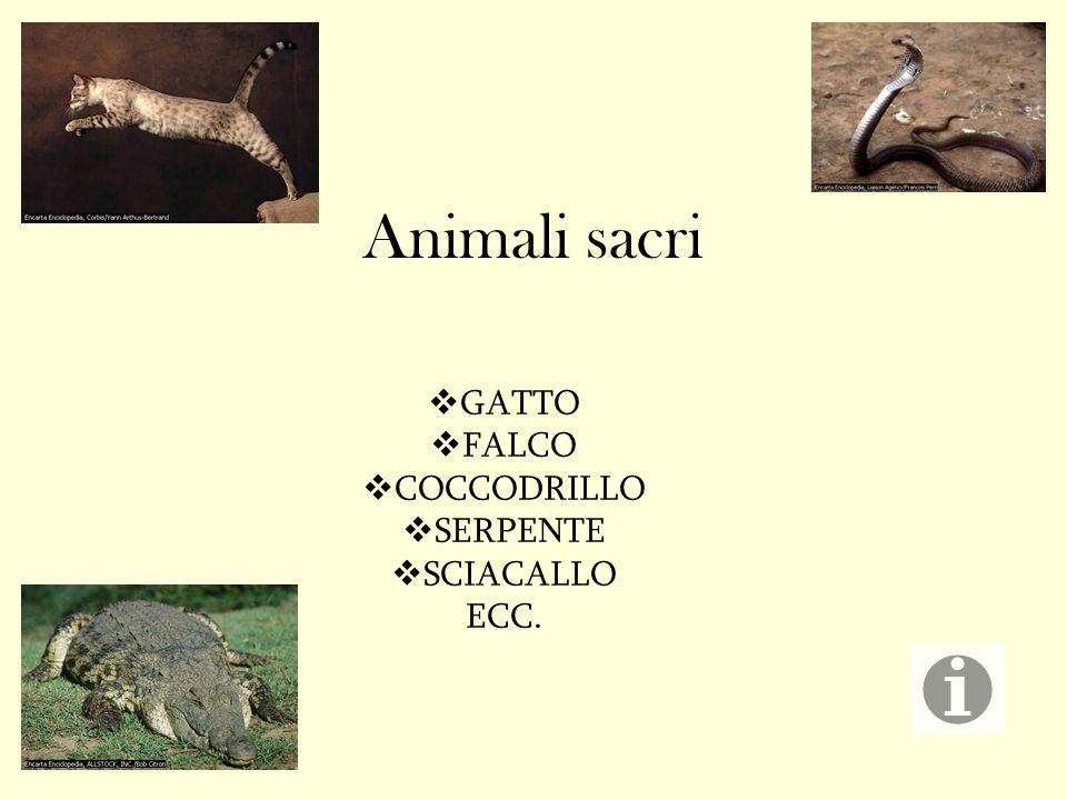 Animali sacri  GATTO  FALCO  COCCODRILLO  SERPENTE  SCIACALLO ECC.