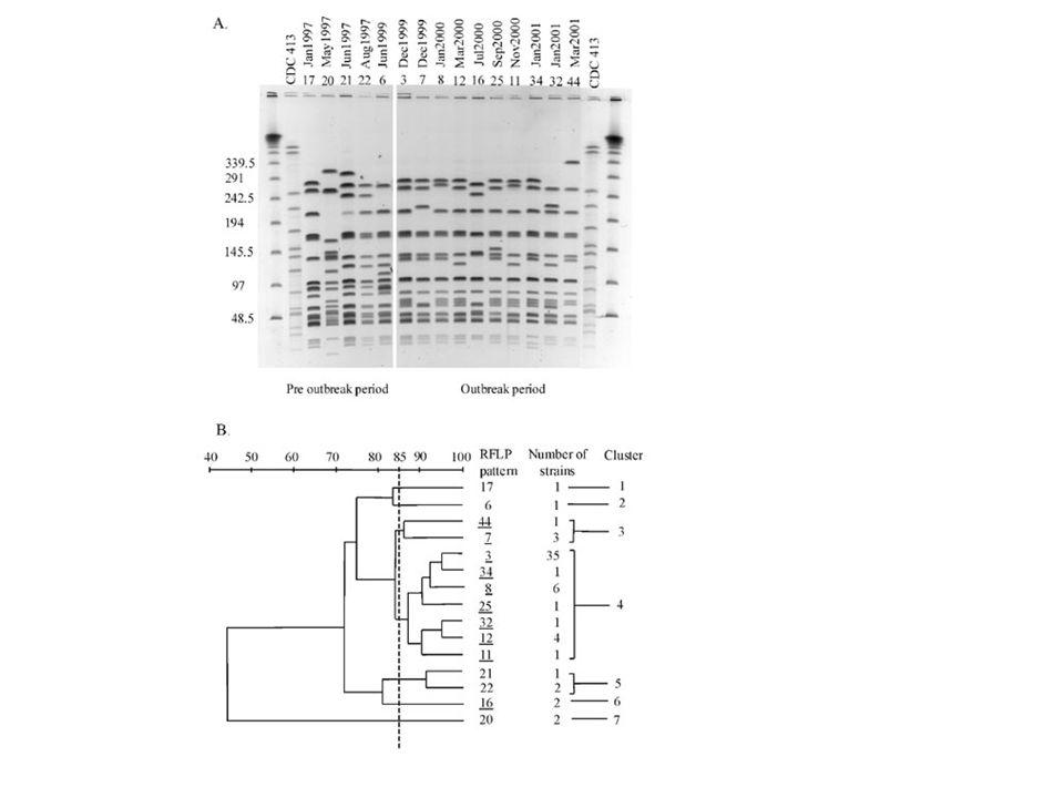 Analisi dei dati Allineamento delle sequenze Confronto con sequenze di riferimento (banche dati) Elaborazione dei dati –NCBI (www.ncbi.nlm.nih.gov/)www.ncbi.nlm.nih.gov/ –EMBL (www.embl- heidelberg.de)www.embl- heidelberg.de –Blast, Fasta, Phylip, Neighbor-Joining Method ……………