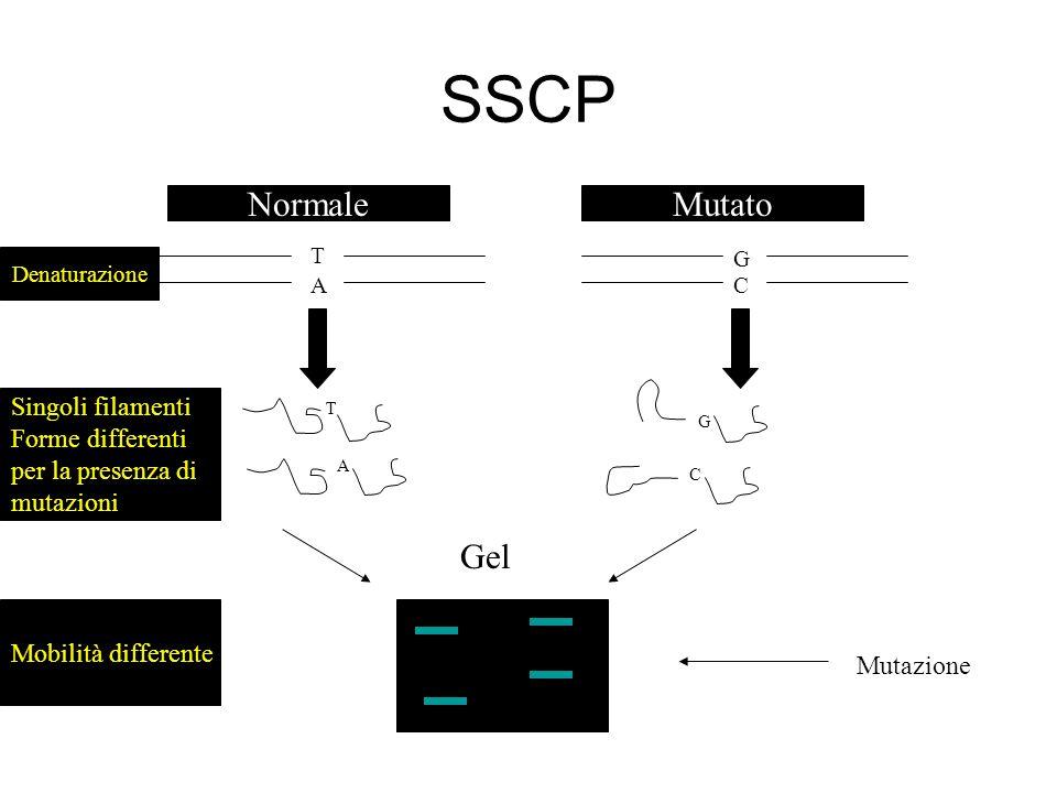 SSCP T A G C T A G C NormaleMutato Denaturazione Singoli filamenti Forme differenti per la presenza di mutazioni Gel Mutazione Mobilità differente