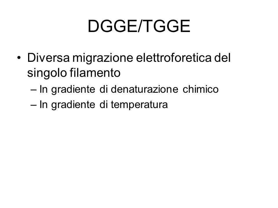 DGGE –Purificazione del prodotto della PCR –Determinazione del profilo di melting e del gradiente di denaturazione Formula di Fodde e Losekoot –% di denaturante=(3,2xTm)- 182,4 –Clamp