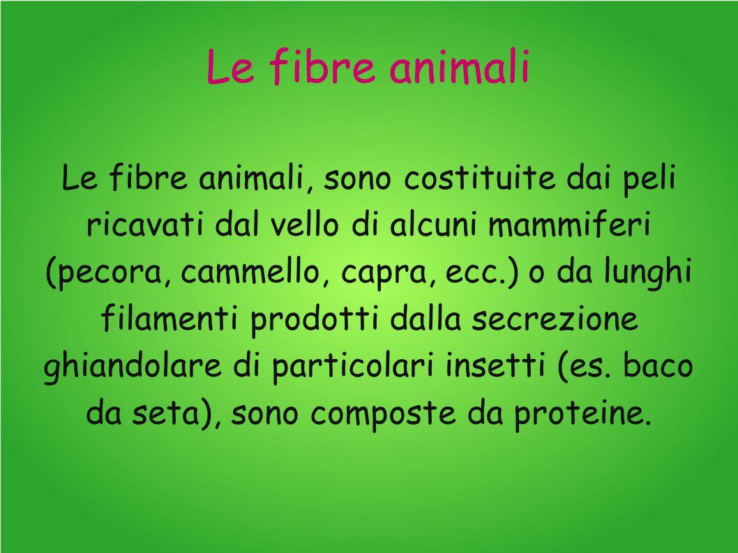 Le fibre animali Le fibre animali, sono costituite dai peli ricavati dal vello di alcuni mammiferi (pecora, cammello, capra, ecc.) o da lunghi filamenti prodotti dalla secrezione ghiandolare di particolari insetti (es.