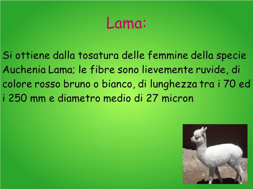 Lama: Si ottiene dalla tosatura delle femmine della specie Auchenia Lama; le fibre sono lievemente ruvide, di colore rosso bruno o bianco, di lunghezza tra i 70 ed i 250 mm e diametro medio di 27 micron.